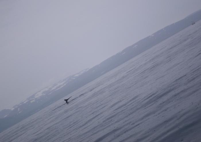 #6 | Birds 'n Whales